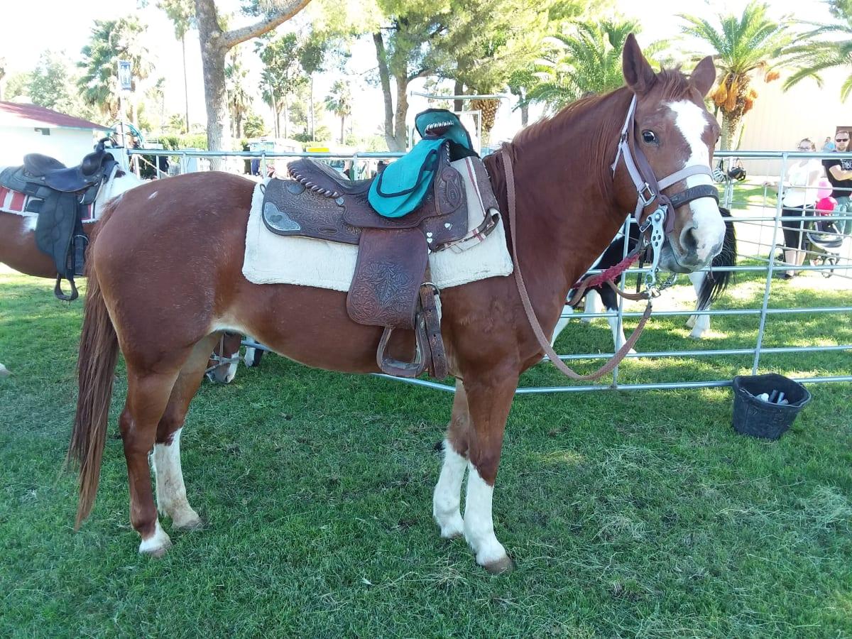 20181020_103128-w1200-horse.jpg