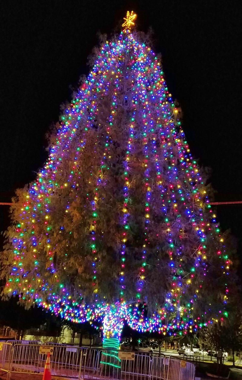 2019-Christmas-Tree-at-Chamber-w800.jpg