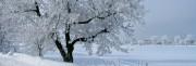 2 Winter Web.jpg
