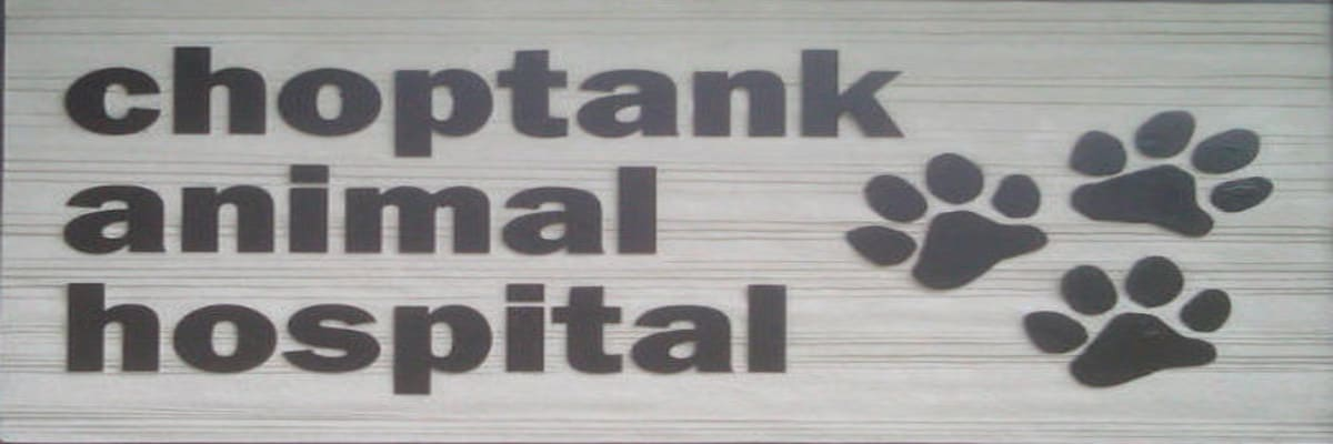 Choptank-Animal-Hosp-w1200.jpg
