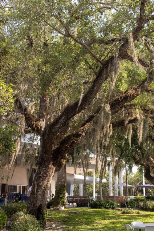 tree-canopy-50-w500(1).jpg