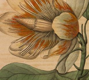 flower-drawing.jpg