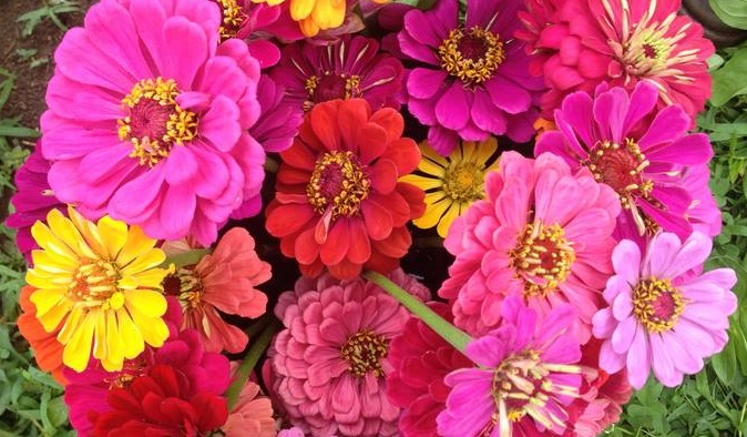 farm-Flowers.jpg