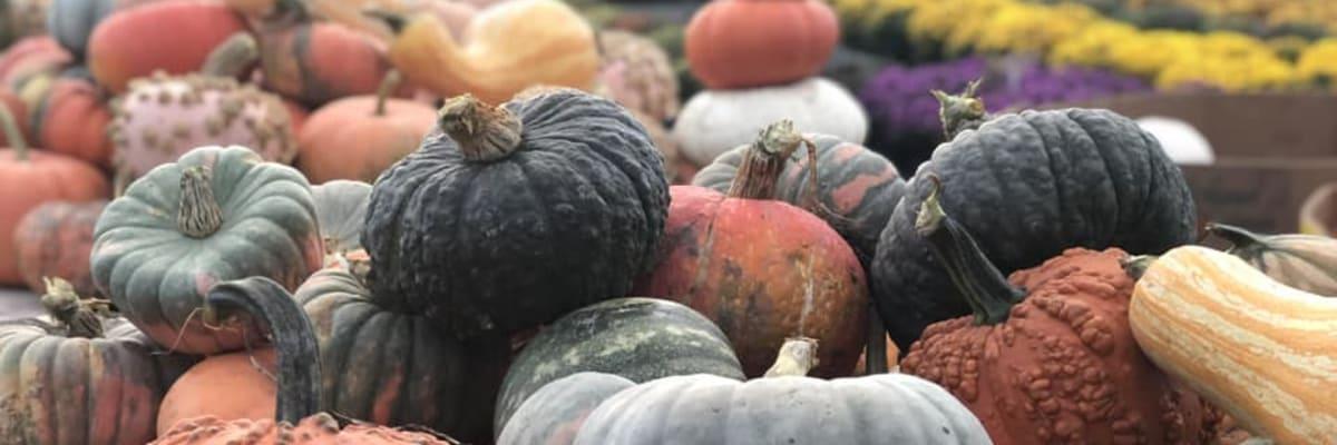 pumpkins-w1200.jpg