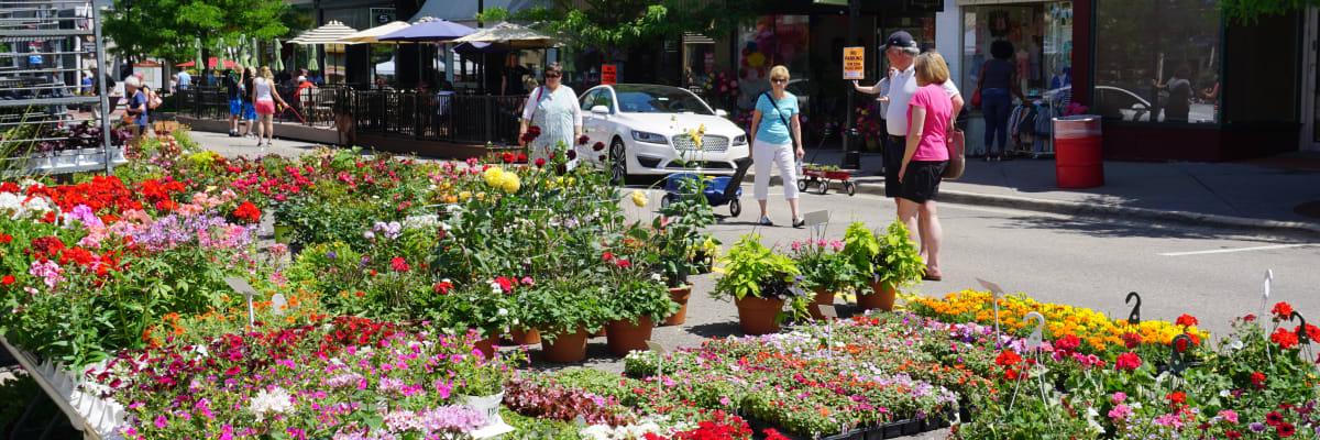 Spring Flower Sale Northville Chamber Of Commerce Mi