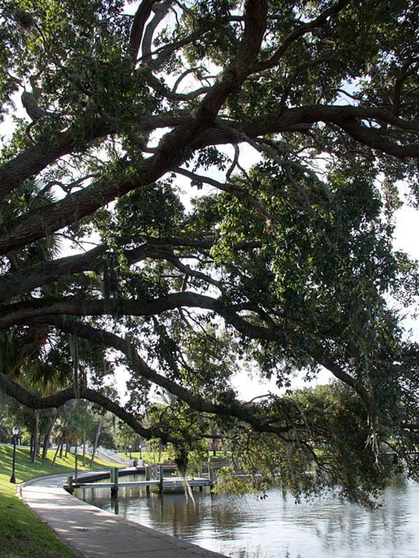 bayou-walk.jpg