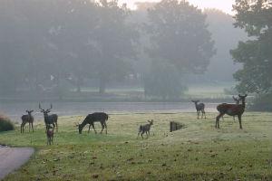 deer-run-1.jpg