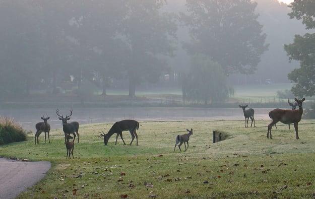 deer-run-1-w625.jpg