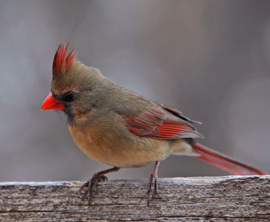 Bird-1-w1034.jpg