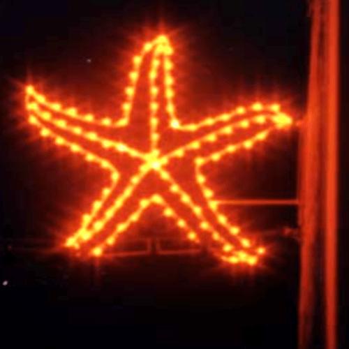 Starfish-w500.png