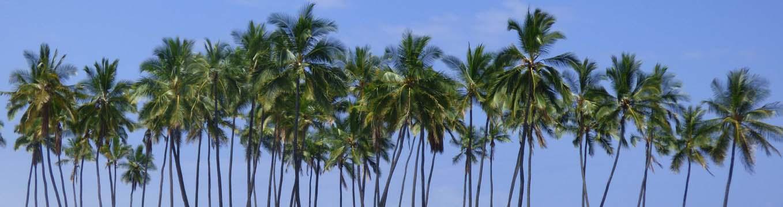 palm-tree-horizon-3.jpg