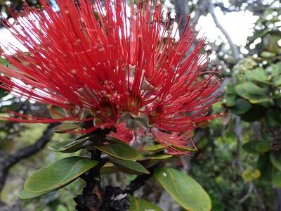 Island of Hawai'i Volcano Update