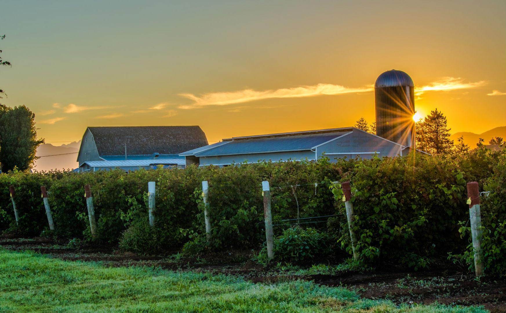 Sunrise over silo and farm scene