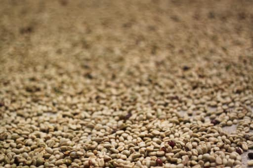 Coffe-Beans-Photo-by-Jonathan-Hood-w512.jpg
