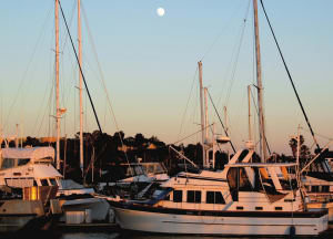 Moon-over-Marina-(Denis-Shea)-w300.jpg
