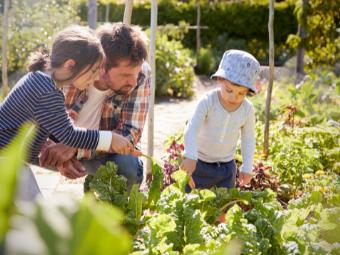 kids-gardening.png