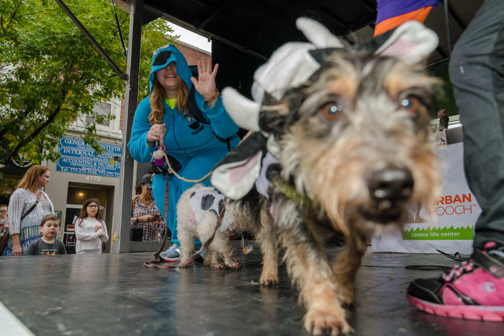 Apple Fest Pooch Costume Contest