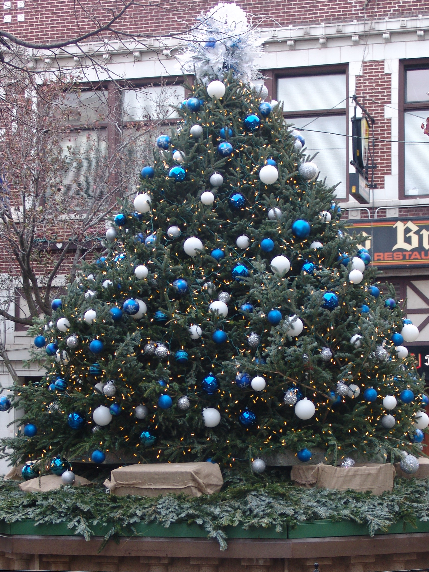 Tree-w1500.jpg