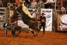 Wild Thing Bull Riding.jpg