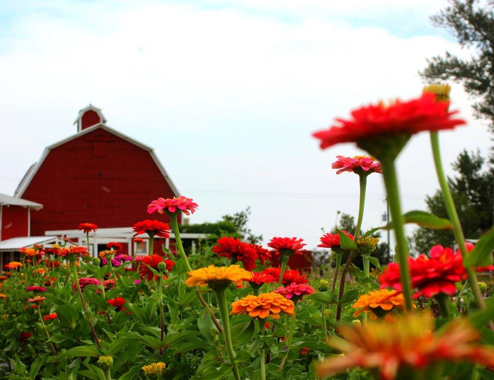 berrypatchfarm.jpg