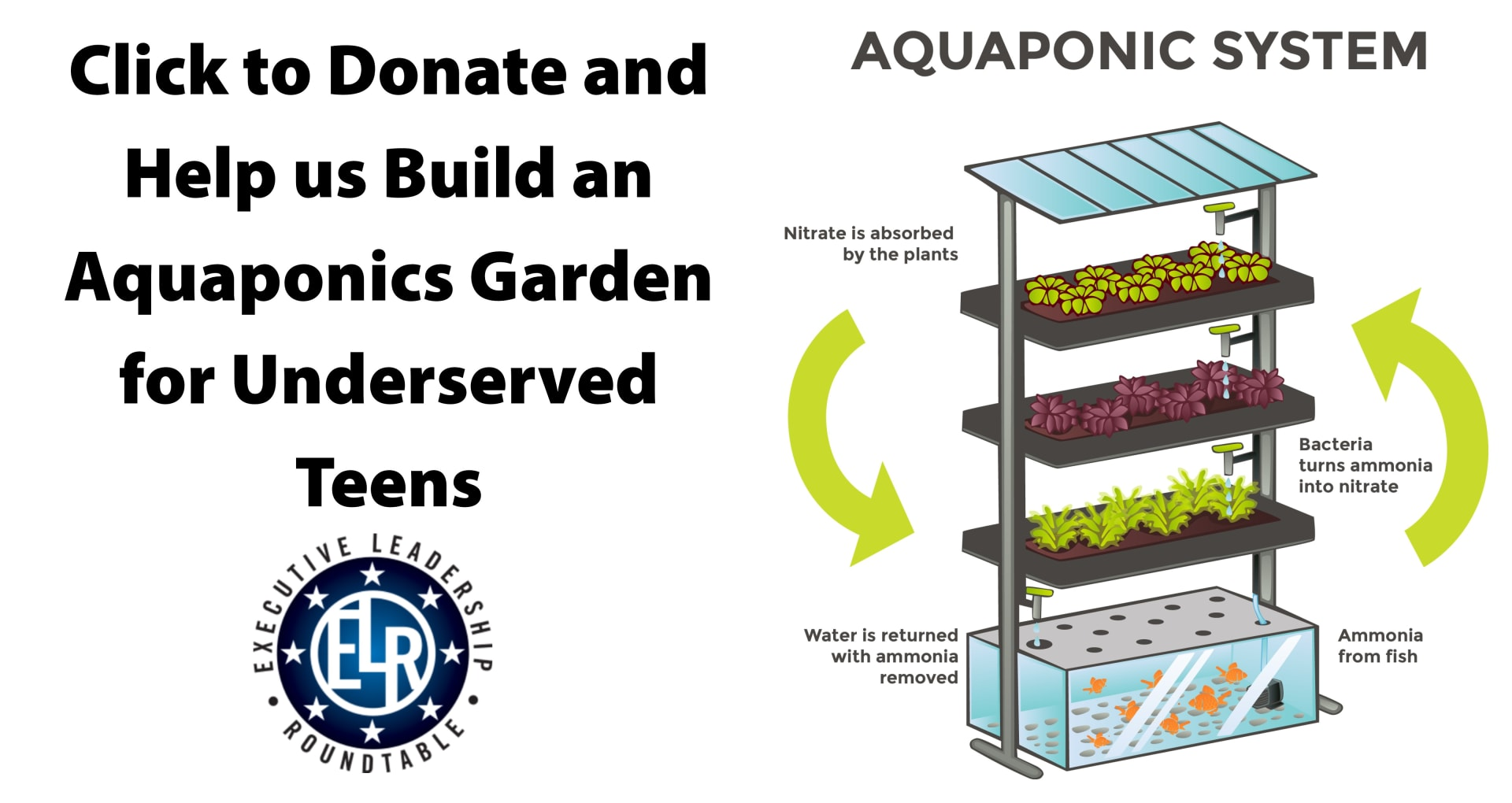 Aquaponics-for-homepage-scroll-w1920.jpg