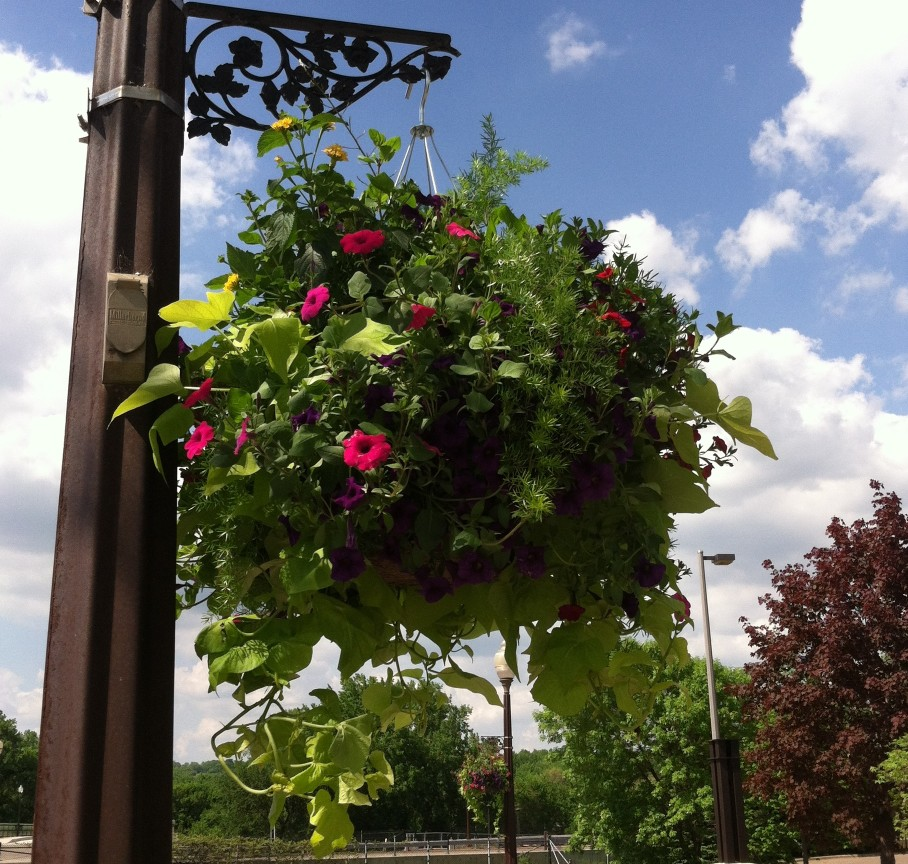 downtown-flower-basket.JPG