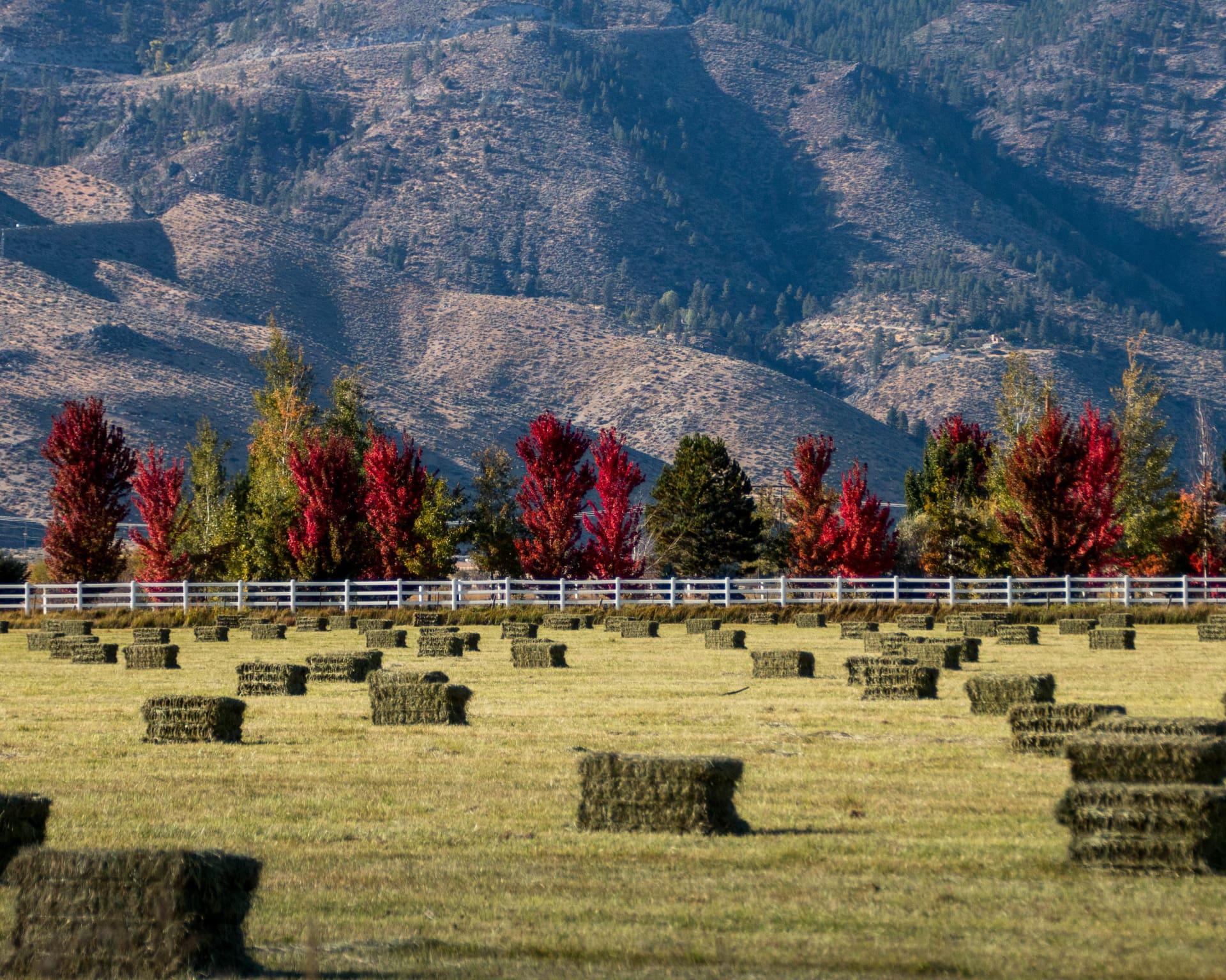 9-30-17-Fall-Hay-Field---Gardnerville-NV-w1920.jpg