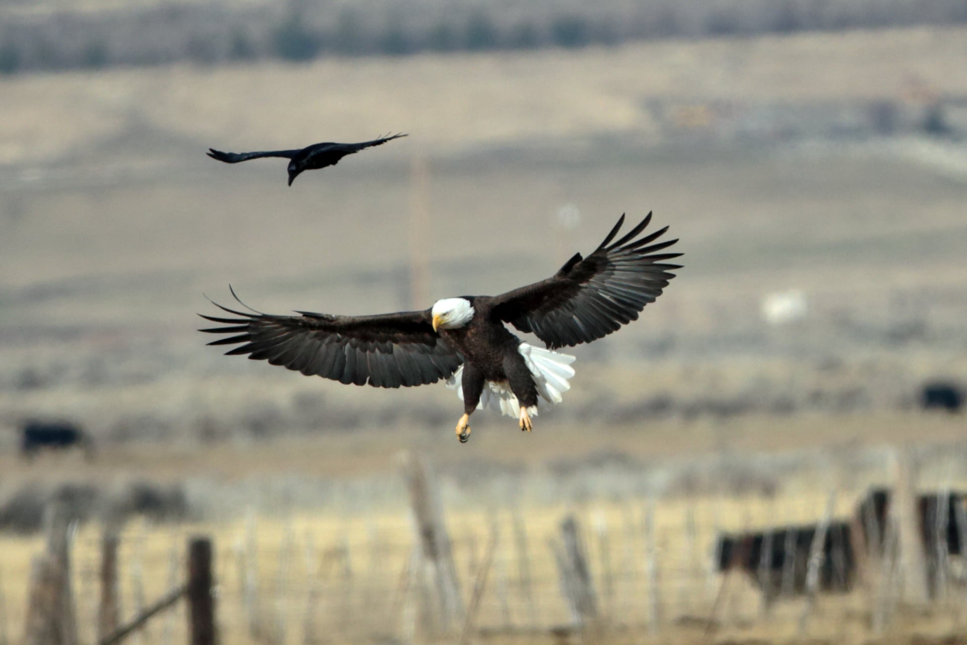 EAGLES & AG - Carson Valley Chamber of Commerce, NV