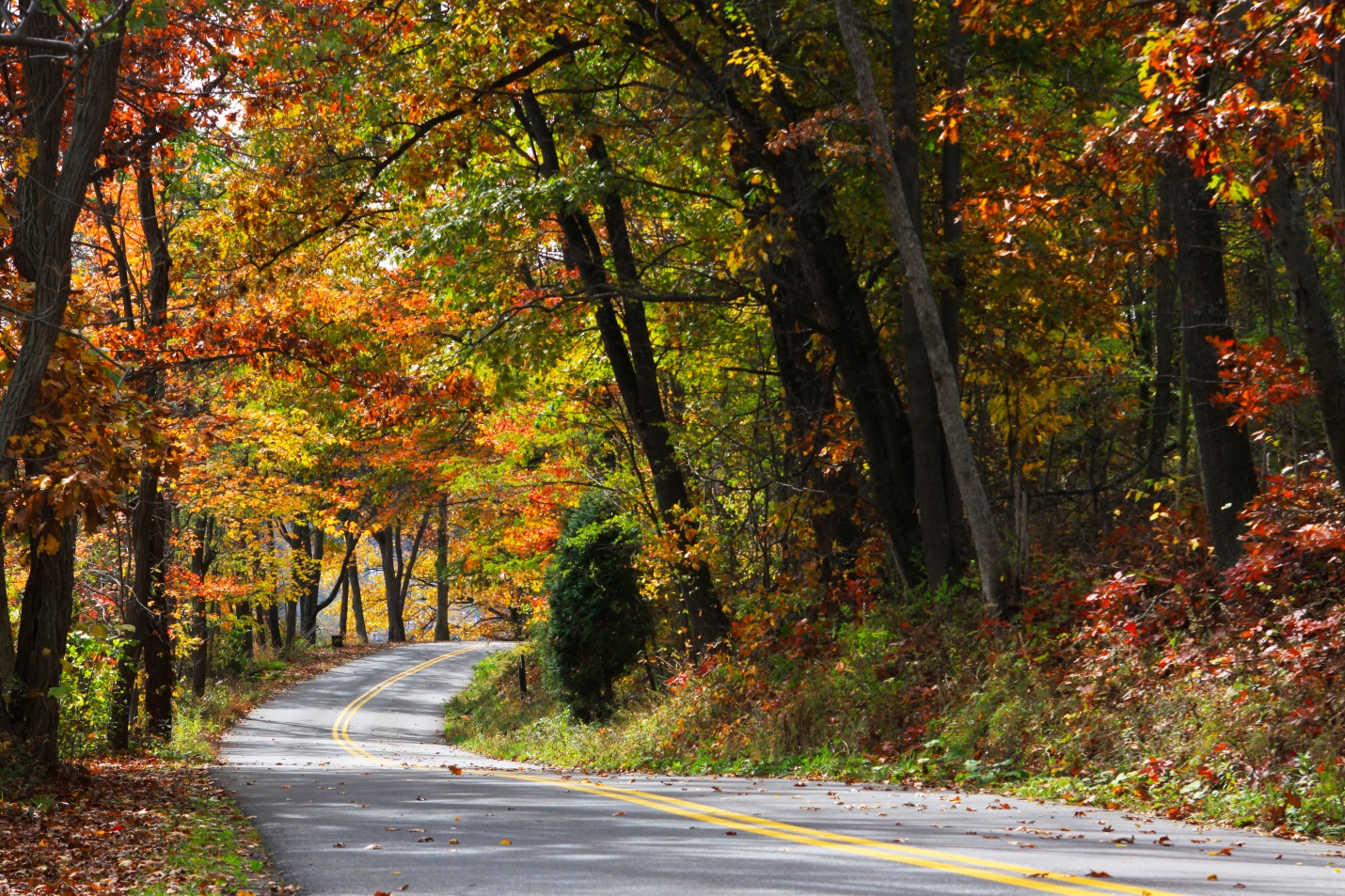 Fall Foliage along the Mountain Maryland Scenic Byway