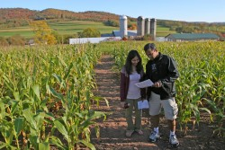 Cove Run Farms Corn Maze