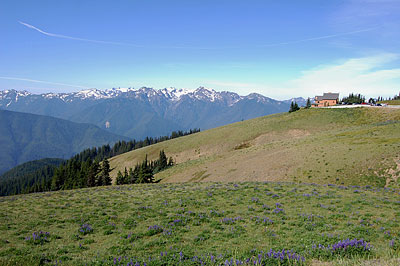 Olympic National Park—Hurricane Ridge