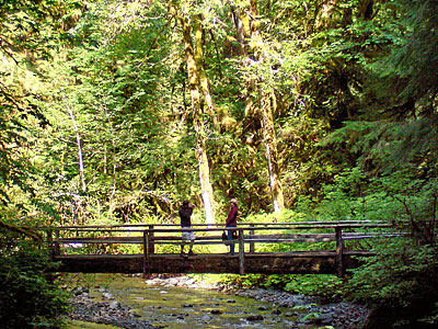 Olympic National Park—Marymere Falls