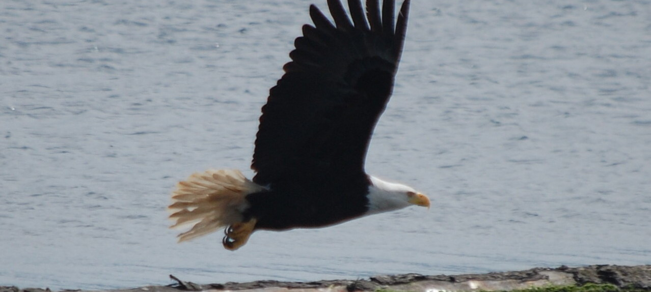 97_Eagle1.jpg