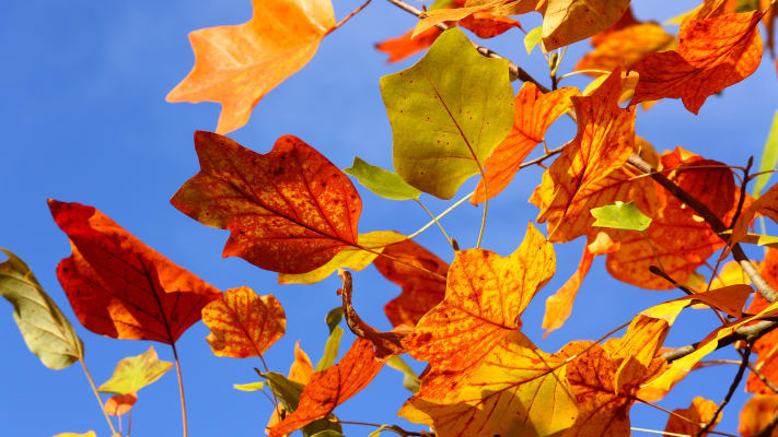 fall(1)-w711.jpg