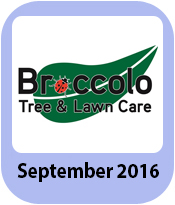 Broccolo Tree & Lawn Care