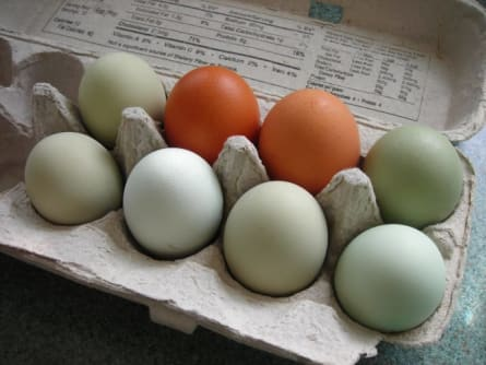 Eggs-w445.jpg