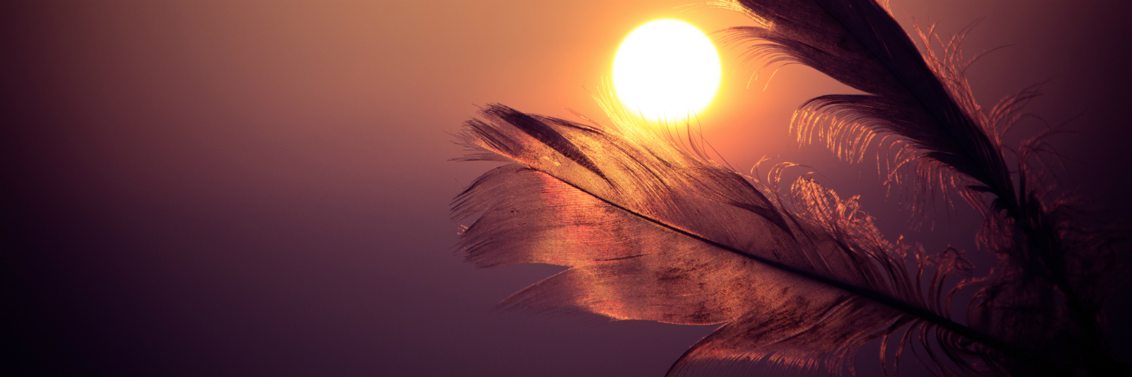 sunset-feathers.jpg