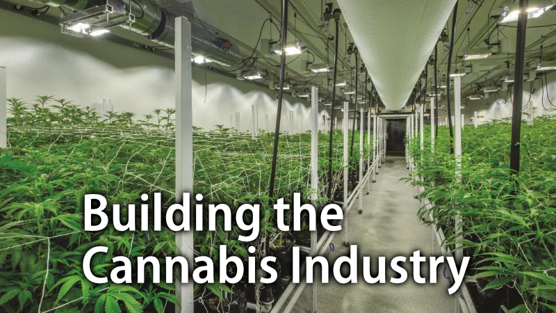 Building the Cannabis Industry