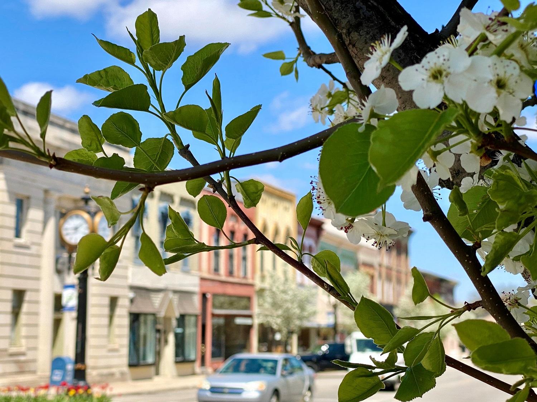 Portland.MI.Michigan.downtown..spring.tree.blossom