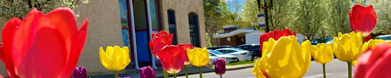 Portland MI Michigan Downtown.spring.tulips.205Kent