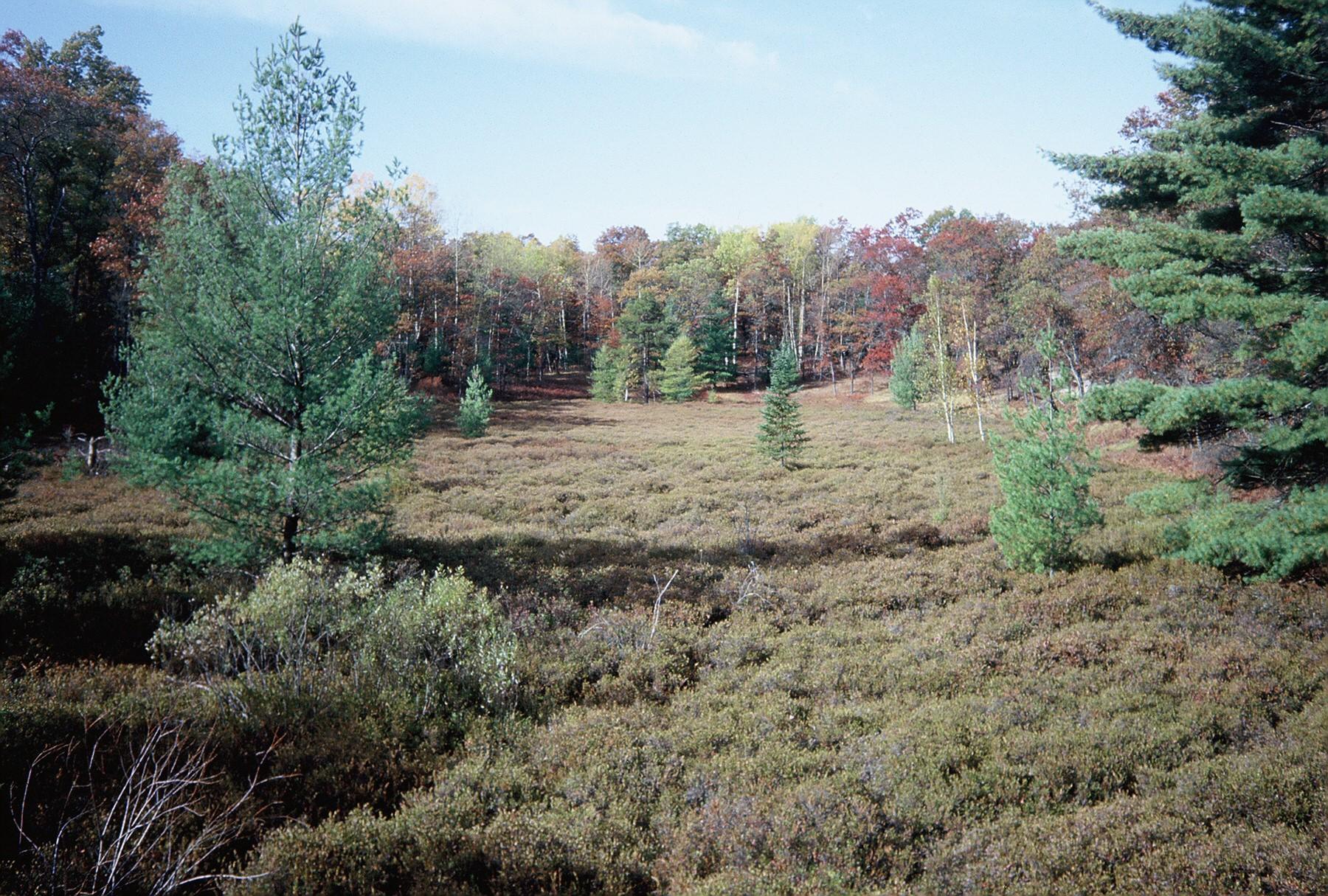 Wetland.1.jpg